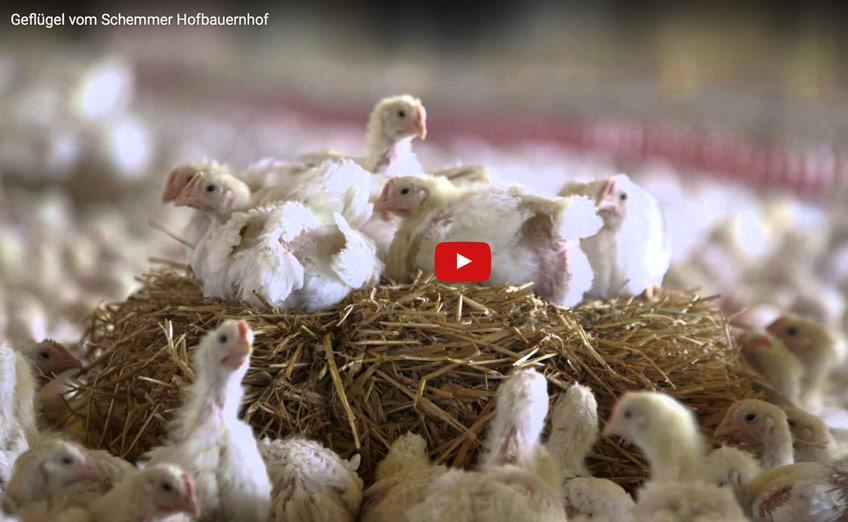 Video Schemmer Hofbauernhof